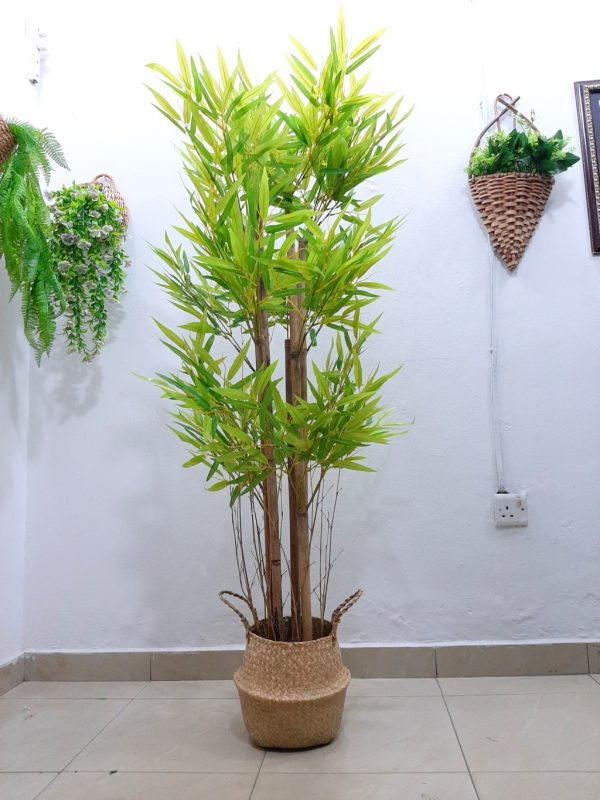 Bamboo Plants with seagrass