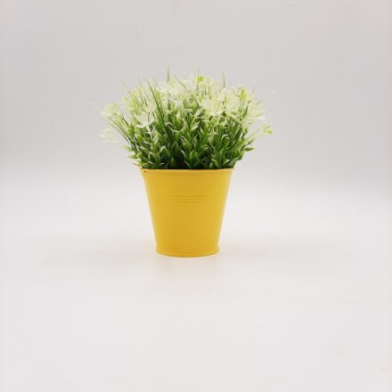 Table potted plants