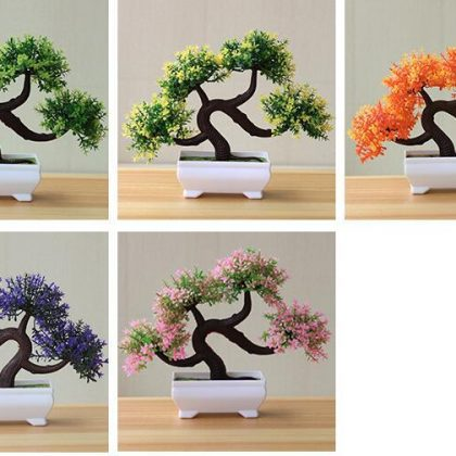 Table Top Bonsai